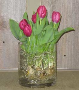 Tulips in Glass